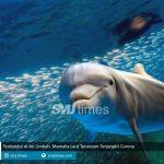 terdeteksi di air limbah mamalia laut terancam terjangkit corona smjtimes