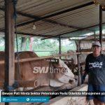 sektor peternakan