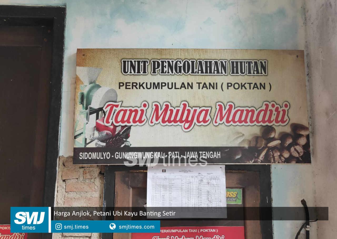 Harga Anjlok Petani Ubi Kayu Banting Setir