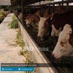 kabupaten pati punya produk susu lokal