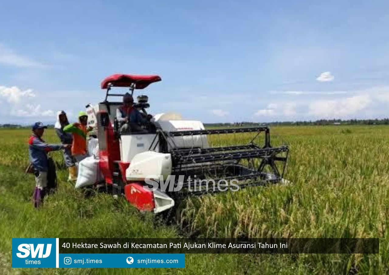 40 hektare sawah di kecamatan pati ajukan klime tahun ini