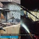 kandang sapi warga jakenan hangus terbakar kerugian capai rp10 juta