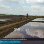 petani garam mulai produksi memasuki kemarau
