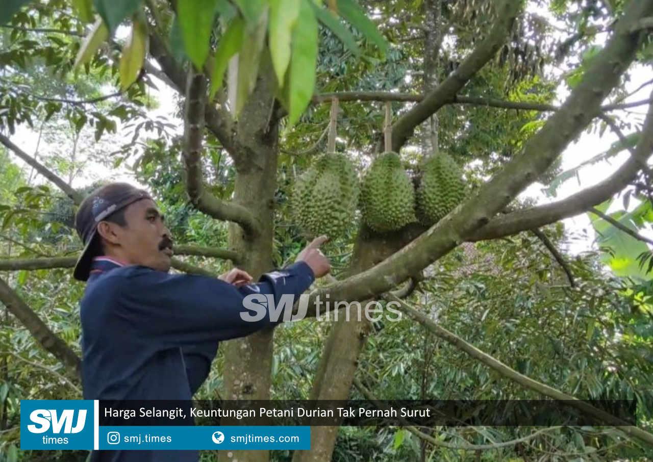 harga selangit keuntungan petani durian tak pernah surut