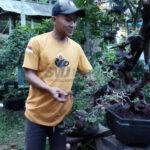 menilik cerita petani bonsai asal pati