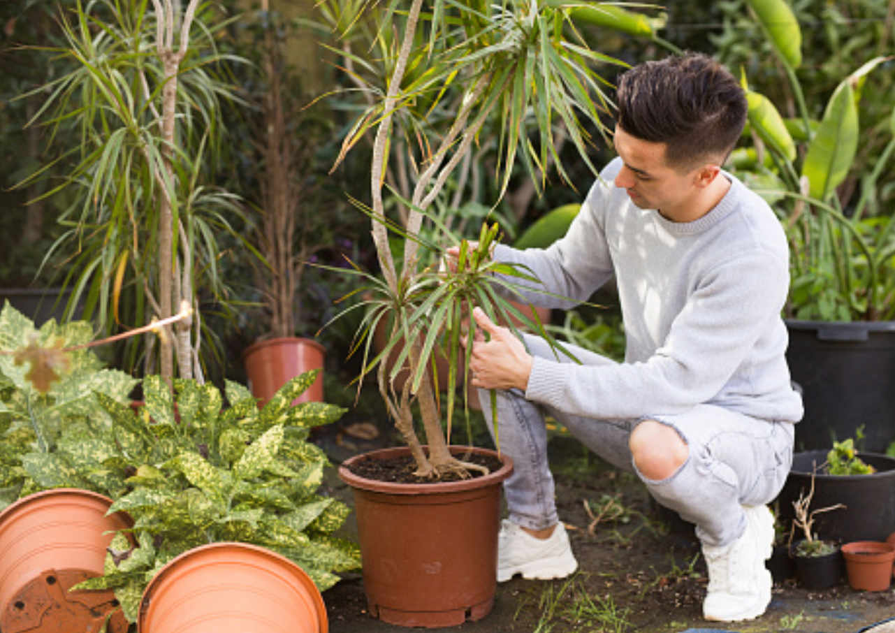 ditanam di dalam rumah jenis tanaman ini bisa redakan alergi