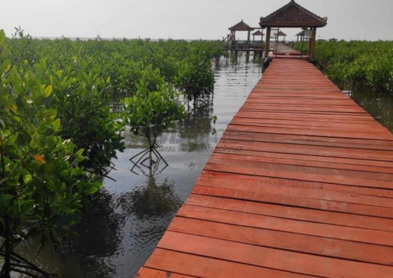 hutan mangrove jadi percontohan pembukaan tempat wisata di rembang