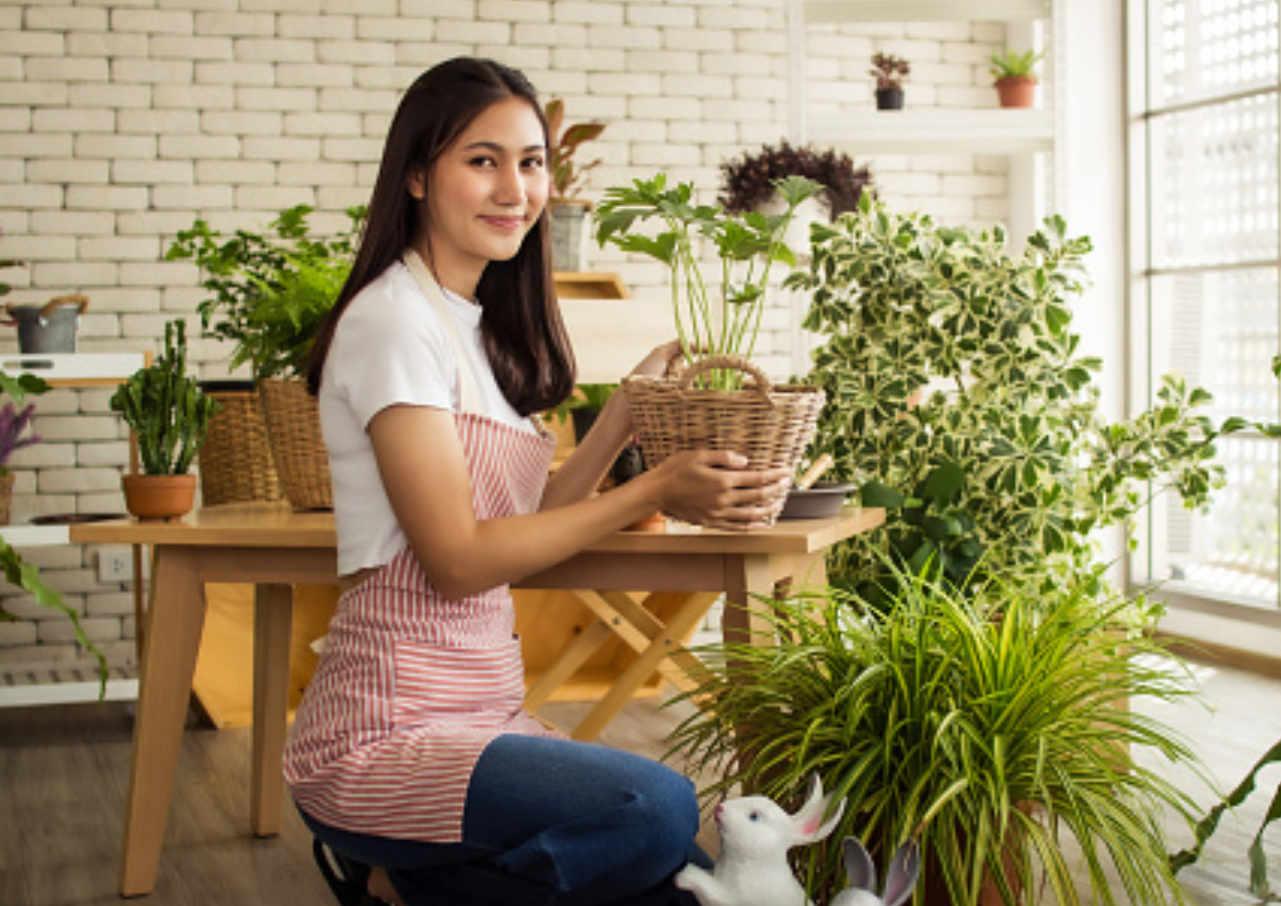 tips merawat tanaman agar tetap segar
