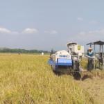 Petani Milenial Diharapkan Berperan Memajukan Sektor Pertanian dan Pangan